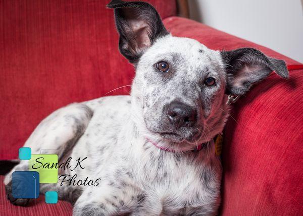 rescue dog, adopt a dog, pet photos, NEPA photographer, nepa pet fund and rescue