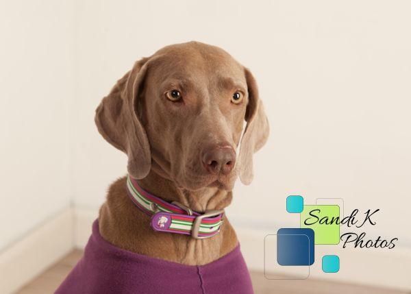 rescue dog, adopt a dog, pet photos, NEPA photographer